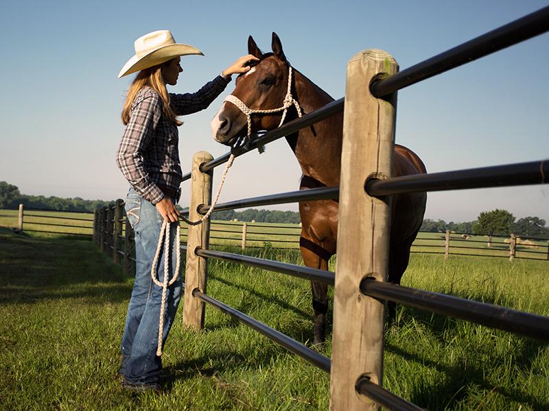 Horse Safe Fence